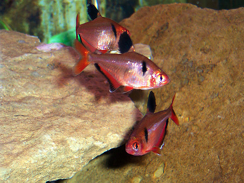 http://aquater.at.ua/_ld/0/03087832.jpg